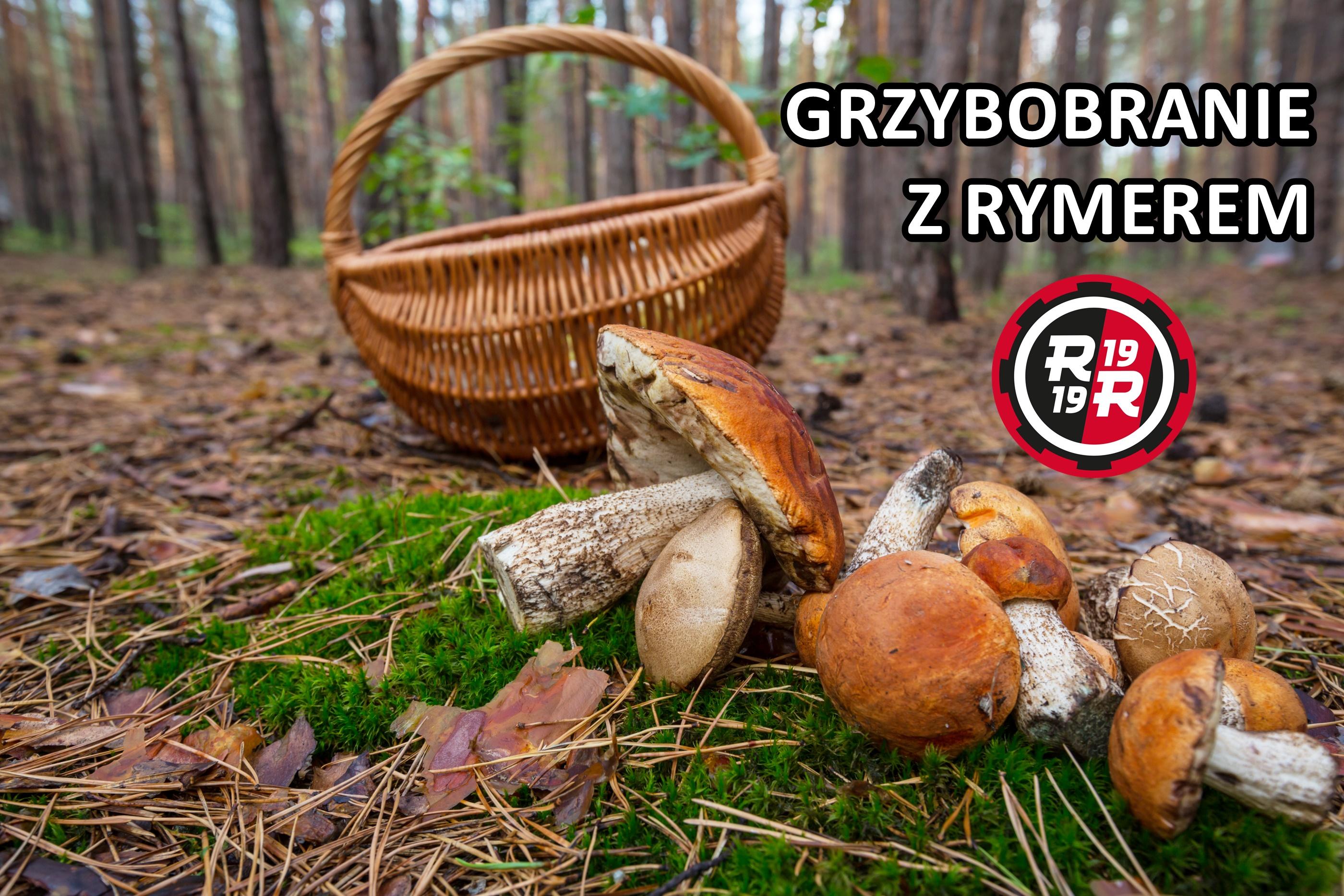 koszyk, grzyby, las